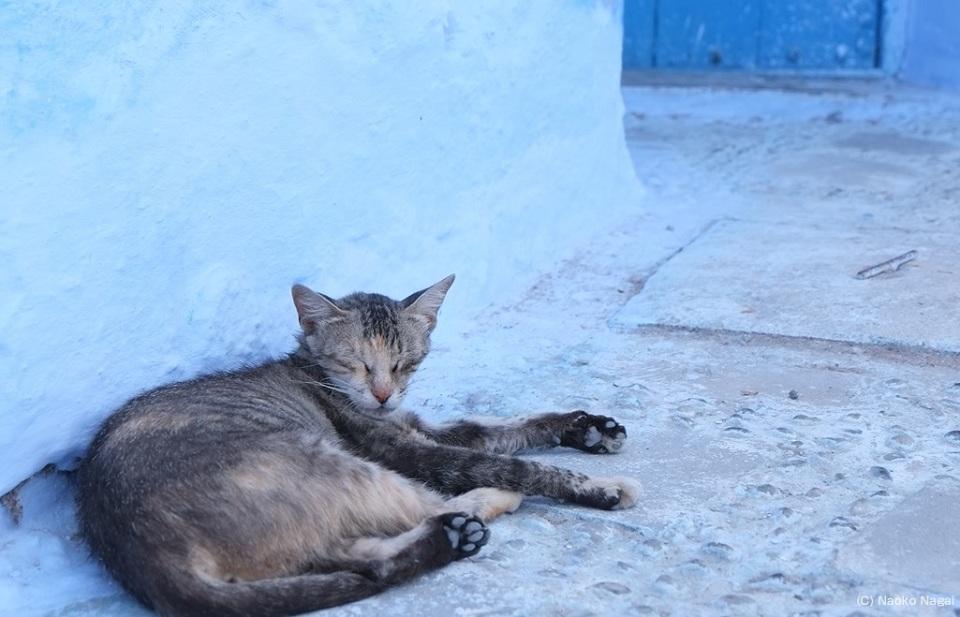 morocco_chaouen_cat