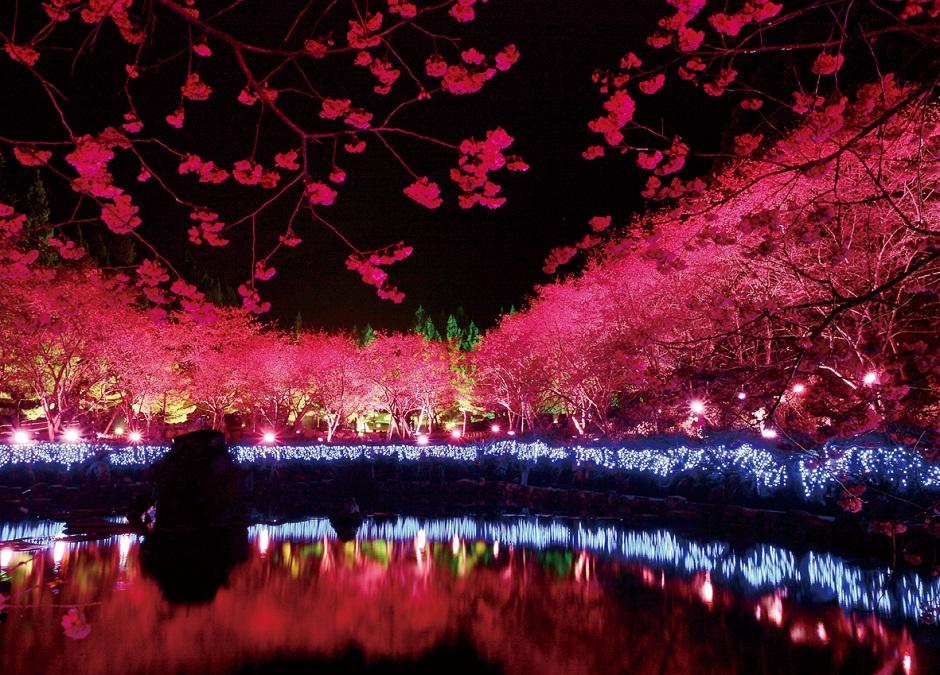九族桜祭り夜桜