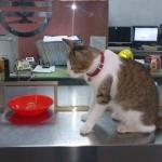 """【6位:【台湾】侯硐(ほうとん) 台北から電車で40~50分程度の距離にある町。 かつて炭鉱で栄えた村は、今や猫と、商店が扱う猫グッズで猫村の名に恥じない癒しスポットとなっています。 村を歩けばいたるところで人懐っこい猫に出会えるため、世界から""""猫好きが集まる村""""として注目を集めています。"""