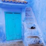 @sam_36 さん 撮影 「犬派だったわたしが気づいたらインスタでネコ写真にいいね押しまくってたりとか、あるいは好きな色は緑って言ってたのに持ち物の大半が青だったりするこれは、たぶんモロッコ病の症状なのです。」