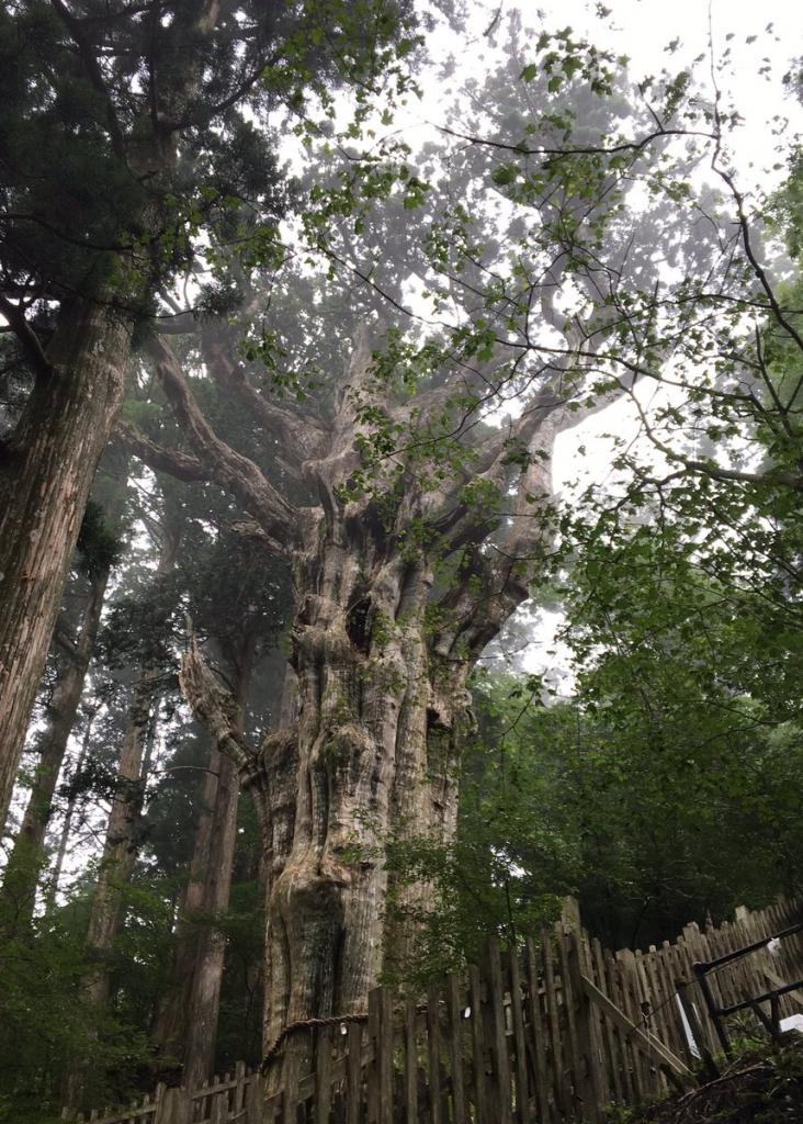 LW7月の旅玉置神社