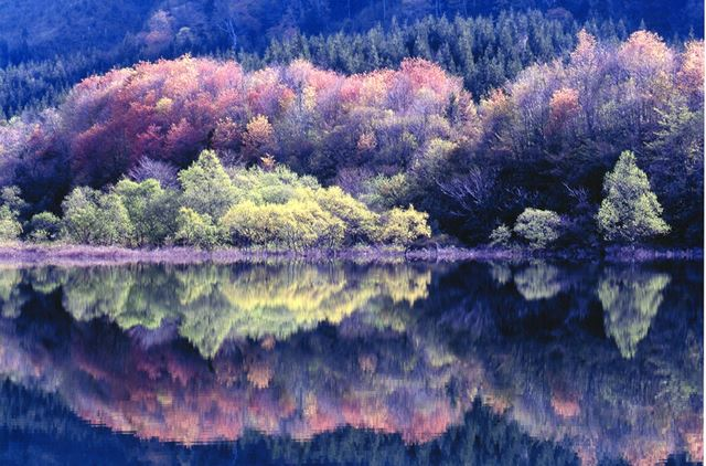 秋田県大館市・田代五色湖の桜