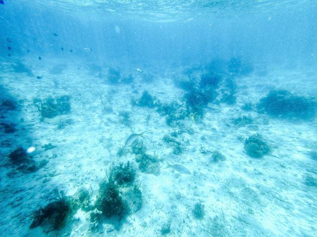 キューバ カヨラルゴ島 海の中