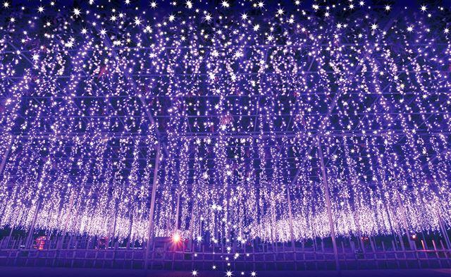 日本三大イルミネーション あしかがフラワーパーク「光の花の庭」奇蹟の大藤