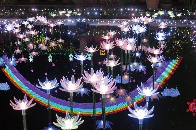 日本三大イルミネーション あしかがフラワーパーク「光の花の庭」光の睡蓮