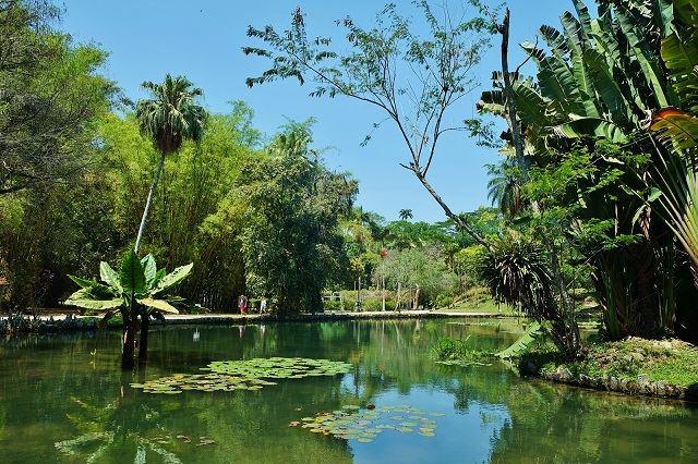 ブラジル フォトジェニックスポット リオデジャネイロ植物園
