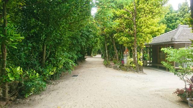 沖縄 「備瀬のフクギ並木」