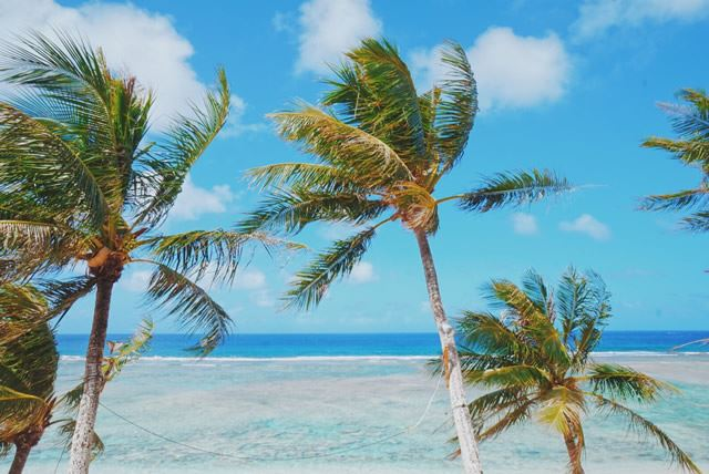グアム ココパームビーチ ヤシの木