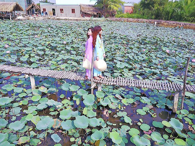 ベトナム・ホーチミン 蓮池