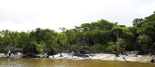 沖縄 西表島 ジャングルクルーズ