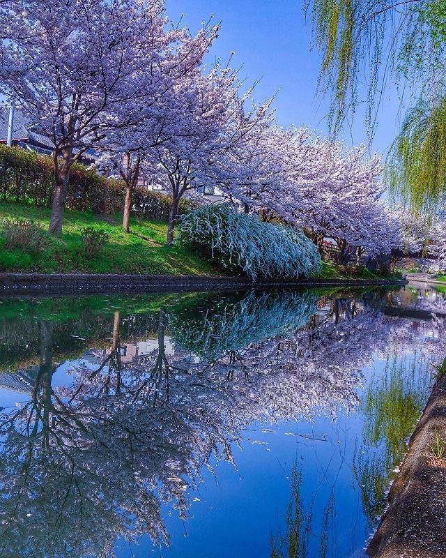 京都 伏見港公園