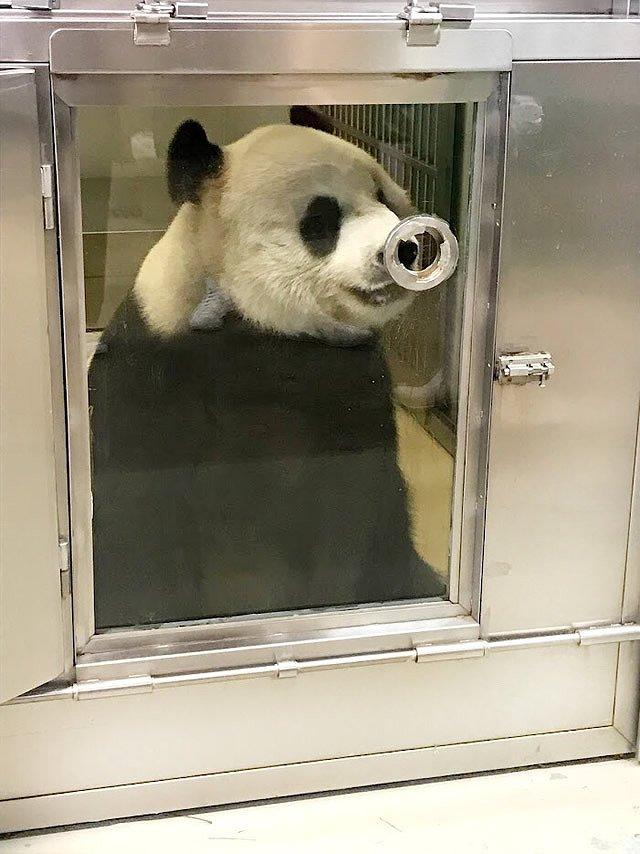 香港 Ocean Park(オーシャンパーク) パンダとのふれあい体験プログラム