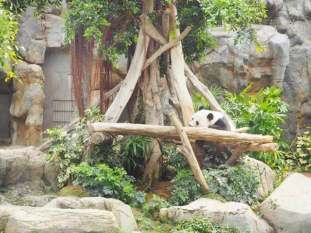 香港 Ocean Park(オーシャンパーク) Giant panda Adventure